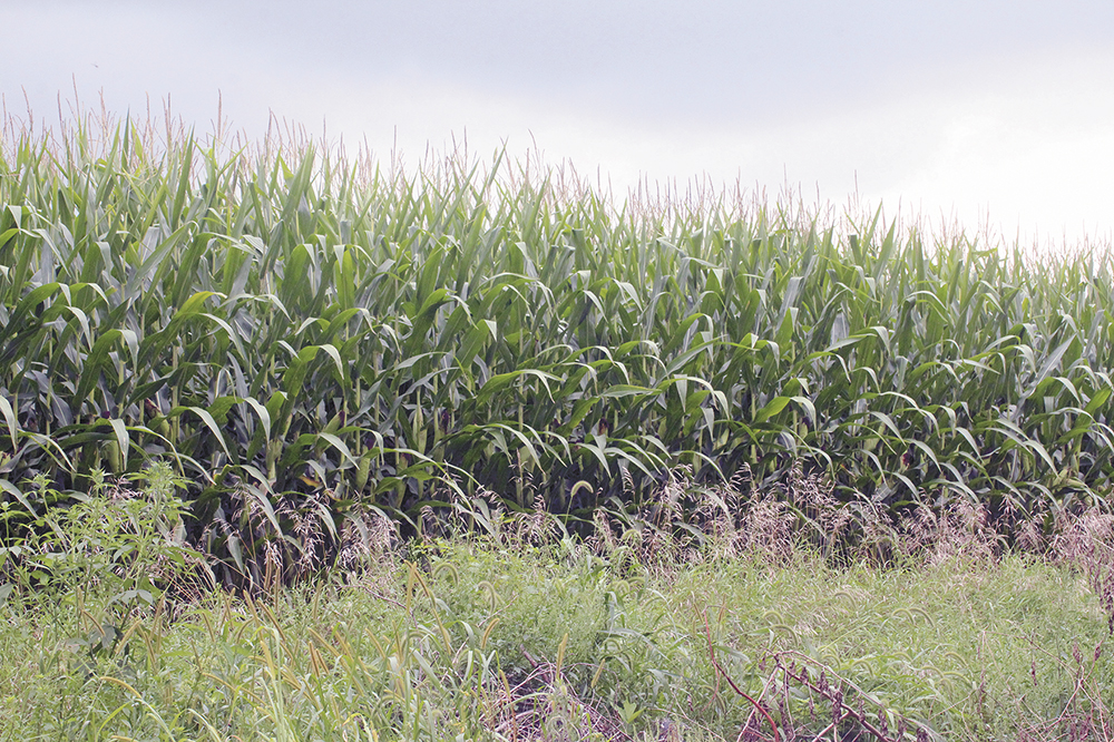 Area crops good, slightly ahead of schedule