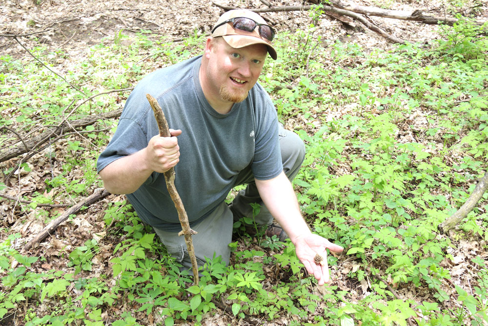 "Prospecting for mushroom ""gold"" and avoiding poison ivy"
